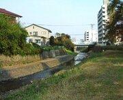 地元の努力でサケが戻った! 今年も宮城県の梅田川に遡上
