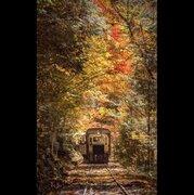 「ジブリのような秋に出会った」 物語の世界のような紅葉写真に絶賛「すごく綺麗」「癒される」