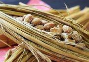 「関西人は納豆嫌い」もう昔の話? 大阪生まれ「なにわら納豆」が地元で人気