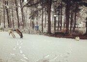 初雪に大興奮!はしゃぎまくりの猫ちゃんたちに癒される