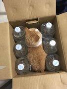 これが猫よけ?全然怖くないにゃ! 水入りボトル「大好き」なニャンコ