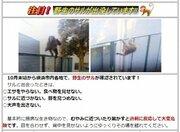 「お巡りさんが網や棒を...」 サル逃走、神奈川をぐるり回って大田区へ