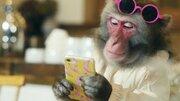 次世代のインフルエンサーは「サル」? 栃木県公式のインスタグラマー「トッチー」登場