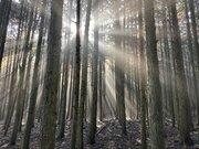 山を降りて感じたこと  ー「日本の林業」について、考えたことはありますか?