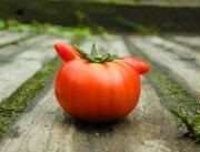 規格外で売れないトマトをTwitterに投稿したら...「今やボーナスです」 いったい何が?話題の農家に話を聞いた