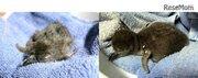 京都水族館、6年連続ケープペンギンの赤ちゃん誕生…初の名前投票も