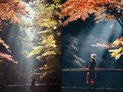 「天使降臨してる」「息を飲む美しさ」 朝の光が差し込む神社が完全にファンタジー