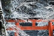 赤い春日灯籠に、真っ白な雪化粧が... 初雪を迎えた貴船神社が幻想的すぎると話題に