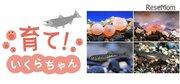 京都水族館、イクラの成長を観察できる特別展示1/6-3/9