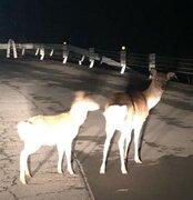 台風被害で「動物園状態」続く奥多摩・日原 「マスコミにも忘れられた」住民の嘆き