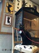 夢二郷土美術館の看板ネコ「黒の助」 執務室完成に「お昼寝部屋かな?!」