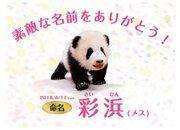 パンダの赤ちゃん「彩浜」名前に込められた思い