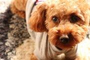 世帯年収1500万円以上のリアル「夫婦で1000円カットですが、犬はペットサロンで1万円のトリミング」